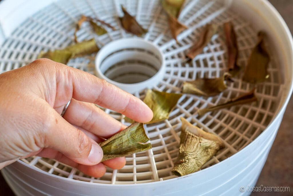 hojas deshidratadas de aloe vera en un deshidratador